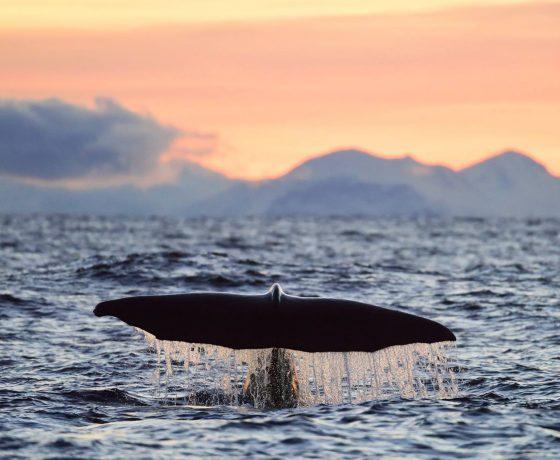 Safari Balene